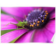 Little Spring Grasshopper Poster