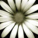 Daisy Love >> by JuliaWright