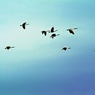 Geese Flying by James Zickmantel
