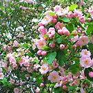 Spring Blossoms-Art Prints-Mugs,Cases,Duvets,T Shirts,Stickers,etc by Robert Burns