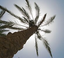 A PALM TREE    by Khaled EL Tangeer