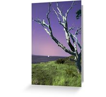 Desolate Tree (colorized) Greeting Card