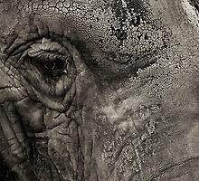 Sombre elephant by scott leeson