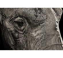 Sombre elephant Photographic Print