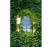 Overgrown Photographic Print