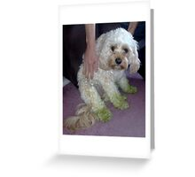Molly Mows the Lawns Greeting Card
