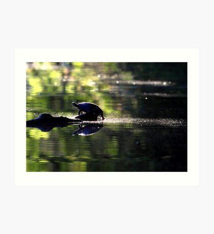 Turtle in the morning light Art Print