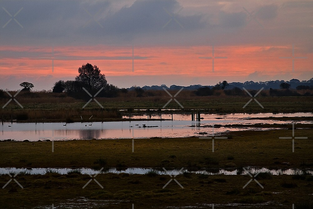 Wetlands at Dusk by Country  Pursuits
