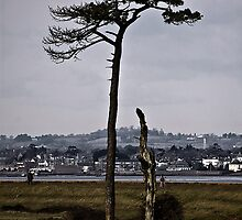 Tree before Topsham by Country  Pursuits