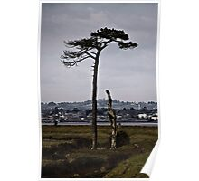 Tree before Topsham Poster