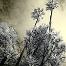 Day of the Triffids by lightsmith