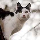 Sammy - Animal Collection  by Kate Krutzner