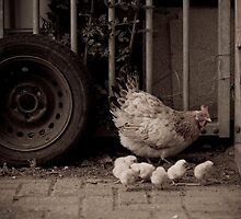 Chicken and Chicks - Animal Collection by Kate Krutzner