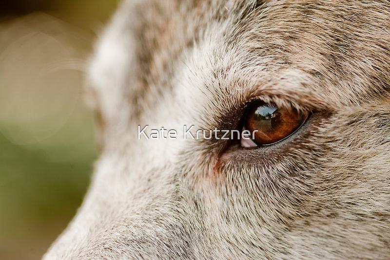 Mustang Eye- Animal Collection  by Kate Krutzner