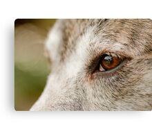 Mustang Eye- Animal Collection  Canvas Print