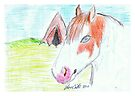 Little Indian Pinto Pony by Diana-Lee Saville