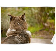 Mustang Listening - Animal Collection Poster