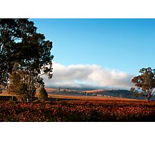 Early Morning in the Barossa Valley Photographic Print