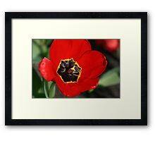 Floral Intricacy Framed Print