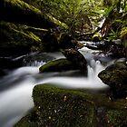 Lady Barron Creek by Michael Gay
