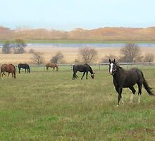 Autumn in the Pasture by Connie Sonnenberg