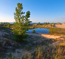 Indiana Dunes National Lake Shore by Curtiss Simpson