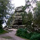 Brimham Rocks  - Yorks Dales. by Trevor Kersley