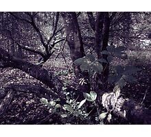 17.8.2010: Garden of Oblivion II Photographic Print