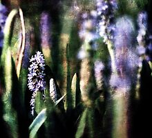 Pickerel Weed by Brad Levine
