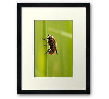 Living in a Sea of Green Framed Print