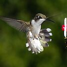 """""""Don't Tread on My Feeder..."""" by Dennis Jones - CameraView"""