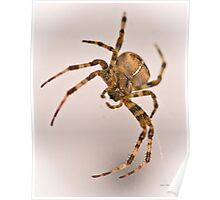 Cross Spider Poster