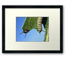 Browsing At the Buffet Framed Print