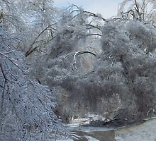 Arkansas' Ice storm an dirt road to house by David  Hughes