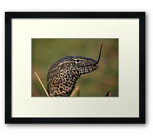 Scales For Breakfast Framed Print