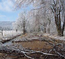 Arkansas' Ice storm  by David  Hughes