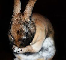 Bunny's Prayer by TickerGirl