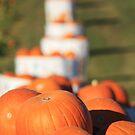 Pumpkin Harvest by Kelly Chiara