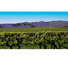 Barossa Hillside Landscape Photographic Print