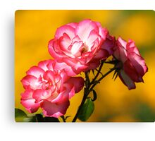 Roses of Pink Before Yellow Bokeh Canvas Print