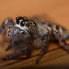 Spider Says Hi by Matthew Hutzell