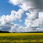 Canola and Cloud by Don Arsenault