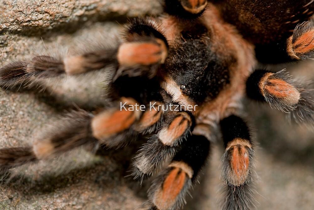 Orange Knee'd Tarantula  by Kate Krutzner