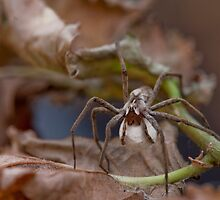 Spider with Egg Sack by Kate Krutzner