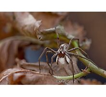 Spider with Egg Sack Photographic Print