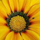 Yellow Flower Close-Up by Chanzz
