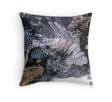 Zebra Fish Throw Pillow