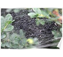 The Spider Web Poster