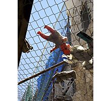 Alley in Hebron - Palestine Photographic Print