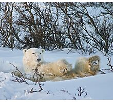 Yoga Bear snow on his face Photographic Print